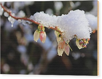 Wood Print featuring the photograph Snow On Blueberry Blossoms by Kristin Elmquist