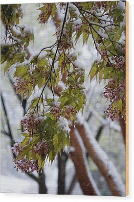 Wood Print featuring the photograph snow on the Cherry blossoms by Chris Flees