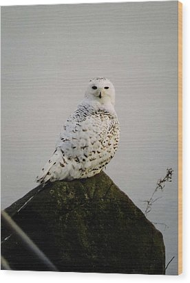 Snow Owl Wood Print by Jack G  Brauer