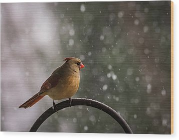Wood Print featuring the photograph Snow Showers Female Northern Cardinal by Terry DeLuco
