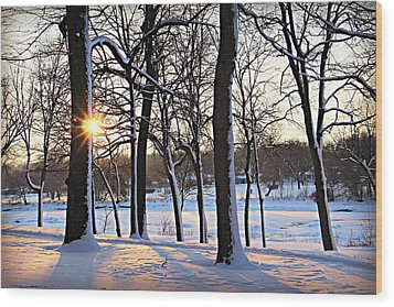 Snow Starred Grove Wood Print by Kathy M Krause