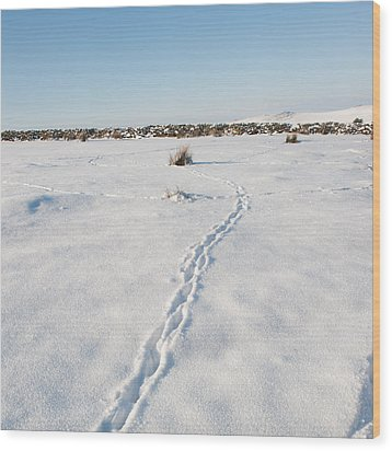 Snow Tracks Wood Print