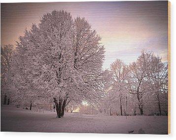 Snow Tree At Dusk Wood Print