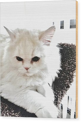 Snowball Is 92 Year Old Widows Cat Wood Print by Marsha Heiken