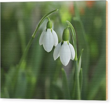 Wood Print featuring the photograph Snowdrops by Mary Jo Allen