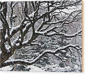 Snowfall And Tree Wood Print by Elena Elisseeva