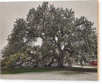 Snowfall On Emancipation Oak Tree Wood Print by Jerry Gammon