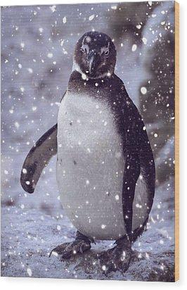 Wood Print featuring the photograph Snowpenguin by Chris Boulton