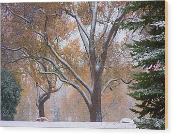 Snowy Autumn Landscape Wood Print by James BO  Insogna