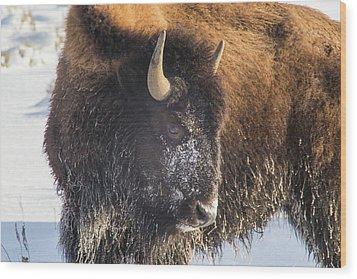 Snowy Bison Wood Print