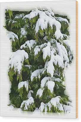 Wood Print featuring the photograph Snowy Cedar Boughs by Will Borden