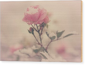 Snowy Day Of Roses Wood Print