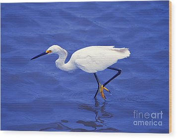 Wood Print featuring the photograph Snowy Egret 1 by Bill Holkham