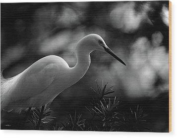 Snowy Egret Bw Wood Print