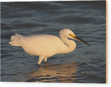 Wood Print featuring the photograph Snowy Egret By Sunset by Christiane Schulze Art And Photography