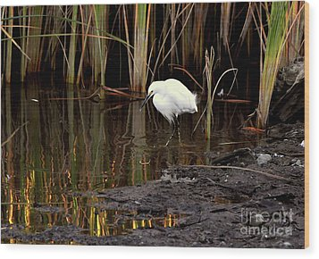 Snowy Egret In Late Afternoon Wood Print