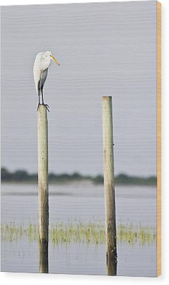 Wood Print featuring the photograph Snowy Egret On Pilings by Bob Decker