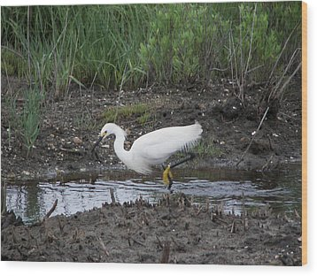 Wood Print featuring the photograph Snowy Egret  On The Prowl by Daniel Hebard