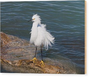 Wood Print featuring the photograph Snowy Egret by Phil Stone