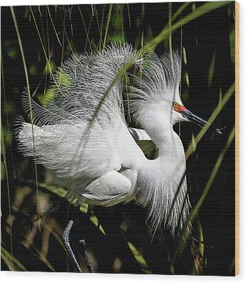 Wood Print featuring the photograph Snowy Egret by Steven Sparks