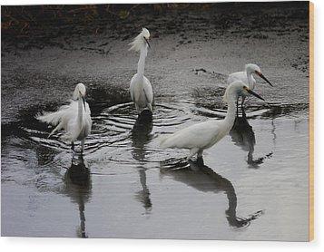 Snowy Egrets I Wood Print