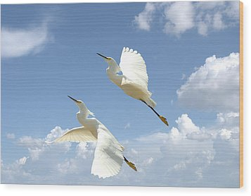 Snowy Egrets In Flight Wood Print
