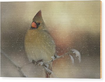 Snowy Female Cardinal Wood Print