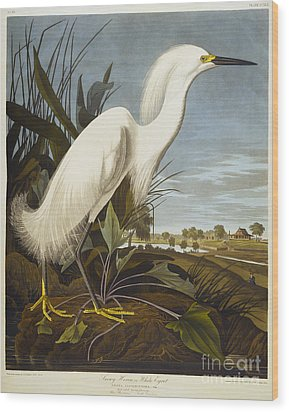 Snowy Heron Wood Print by John James Audubon