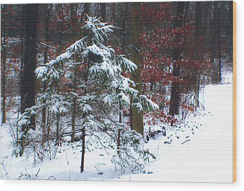 Snowy Little Fir Wood Print