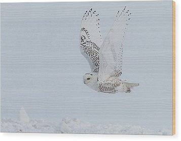 Snowy Owl #3/3 Wood Print by Patti Deters