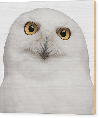 Snowy Owl -bubo Scandiacus Wood Print by Life On White