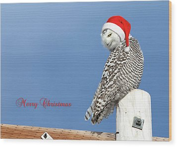 Wood Print featuring the photograph Snowy Owl Christmas Card by Everet Regal