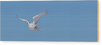Snowy Owl - Dive Wood Print