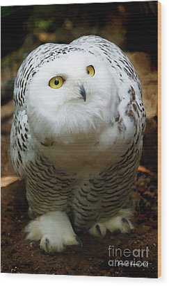 Snowy Owl Wood Print by Jerry L Barrett
