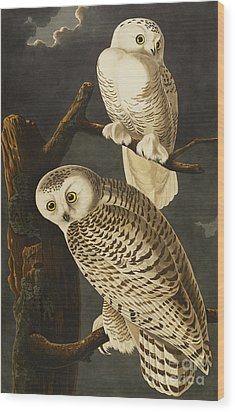 Snowy Owl Wood Print by John James Audubon