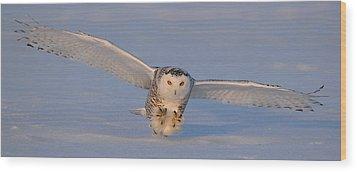 Snowy Owl Last Light Wood Print by Scott  Linstead