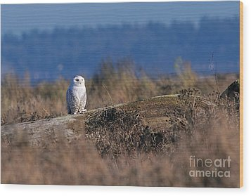 Wood Print featuring the photograph Snowy Owl On Log by Sharon Talson