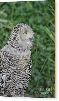Wood Print featuring the photograph Snowy Owl by Patricia Hofmeester