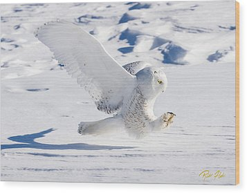 Snowy Owl Pouncing Wood Print