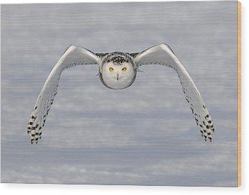 Snowy Owl Wood Print by Scott  Linstead