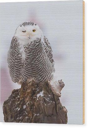 Snowy Owl Winking Wood Print