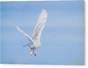 Snowy Owls Soaring Wood Print by Rikk Flohr