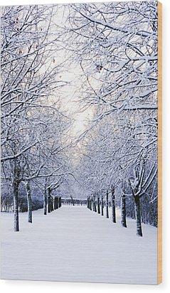Snowy Pathway Wood Print by Marius Sipa