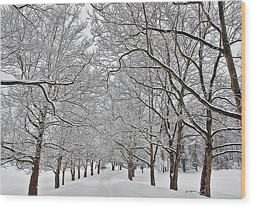 Snowy Treeline Wood Print