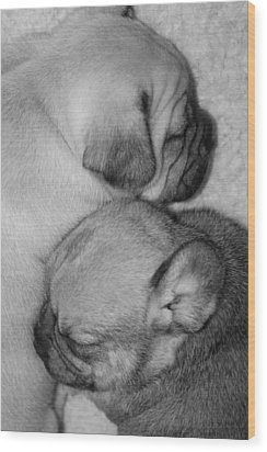 Snuggling Siblings Wood Print by Patricia M Shanahan