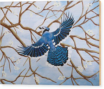 Soaring Blue Jay  Wood Print