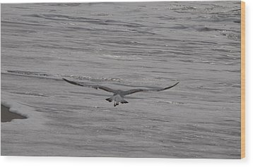 Wood Print featuring the photograph Soaring Gull by  Newwwman