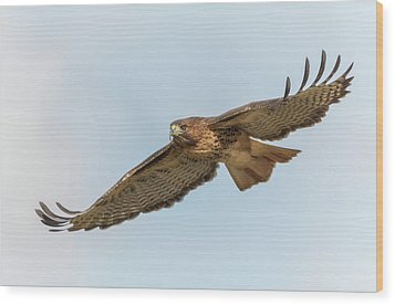 Wood Print featuring the photograph Soaring Hawk 2 by Angie Vogel