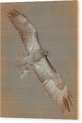 Soaring Hawk  Wood Print by Chris LeBoutillier