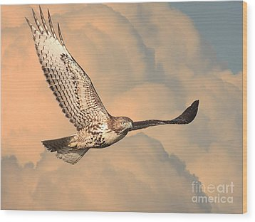 Soaring Hawk Wood Print by Wingsdomain Art and Photography